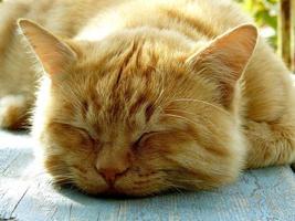 gatto addormentato foto