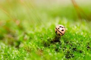 coccinella in natura verde