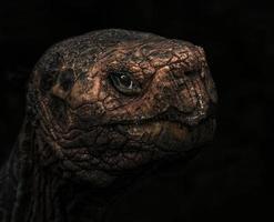 tartaruga gigante delle Galapagos foto