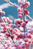 bellezza invernale foto