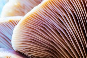fungo selvaggio della foresta di inverno foto
