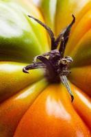 macro di pomodoro foto