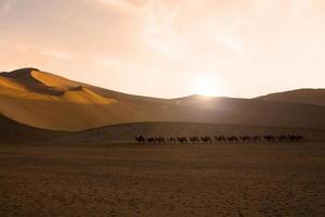 carovana di cammelli attraversando le dune di sabbia foto