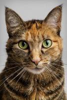 gatto che fissa intensamente