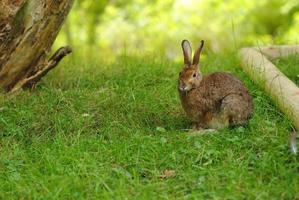 simpatico coniglietto marrone che mangia erba