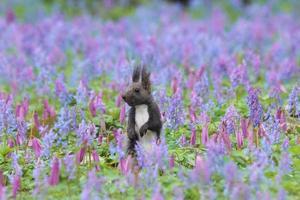 osservazione dei fiori di ezorisu foto
