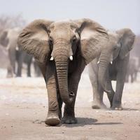 magnifico elefante grigio con sentito camminare vicino dietro di esso foto