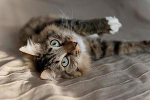gatto sdraiato sul letto foto