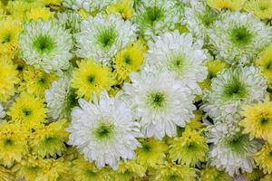 fiori di crisantemo e fiore di fenicottero