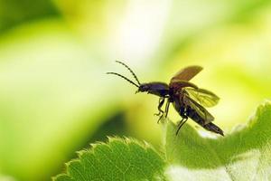 fare clic sul decollo dello scarabeo foto