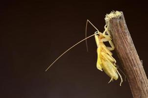 scarafaggio isolato su sfondo marrone