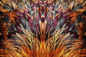 gruppo di piume marrone brillante di alcuni uccelli foto