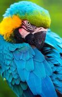 uccello pappagallo foto