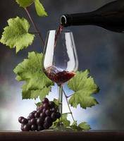 vino rosso foto