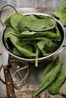 spinaci biologici. foto