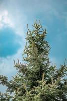 albero verde foto