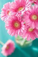 bellissimo bouquet di fiori gerbera rosa in vaso foto