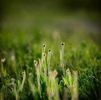 giorno di primavera foto