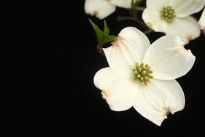 preferito di primavera foto