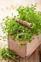 erba fresca del timo in scatola di legno foto
