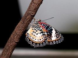 colorato di farfalla foto