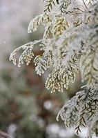 umore invernale foto