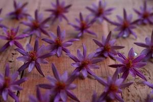 gruppo di fiori rosa nel modello di fila foto