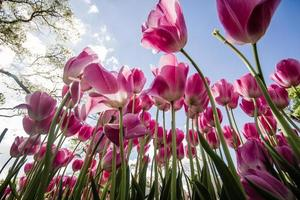 bellissimi tulipani colorati in un giardino verde di Istanbul foto