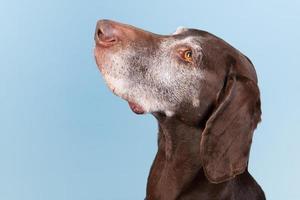 ritratto vecchio cane foto