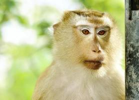 primo piano scimmia portriat con luce ombra foto