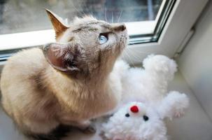 gatto che guarda fuori dalla finestra foto