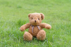 colore marrone dell'orsacchiotto che si siede sull'erba foto