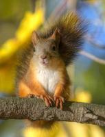 ritratto di uno scoiattolo foto