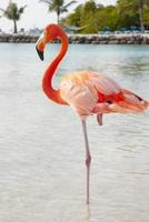 fenicottero rosa foto