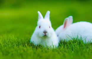 coniglio bianco bambino divertente in erba foto