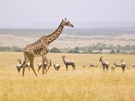 masai mara foto