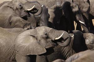 copia elefante gatto foto