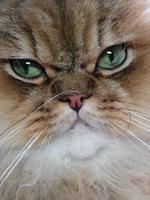 gatto da vicino foto