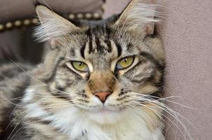 gatti foto
