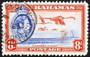 Fenicotteri volanti sul vecchio timbro delle Bahamas foto