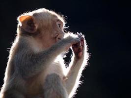 scimmia bambino foto