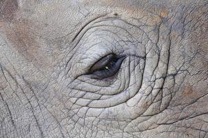 particolare di un occhio grande rinoceronte con un corno foto