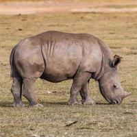 animali in kenya foto
