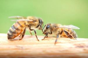 primo piano delle api che mangiano miele foto