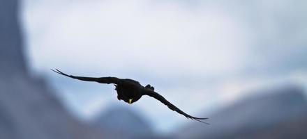 corvo che vola con montagne sullo sfondo