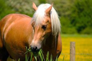 cheval, écurie, grange, ferme, ranch - immagine