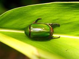 insetti bug foto