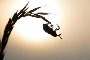 Close up di scarabeo seduto sulla pianta