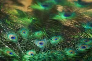 arte digitale, composizione artistica, piuma di pavone, effetto vernice