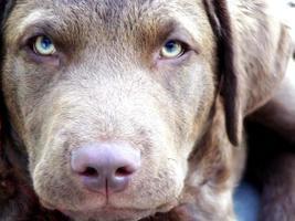 cane da caccia in allenamento